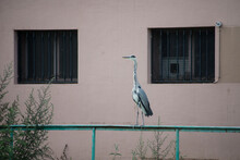 Portrait Of Heron Standing On Metallic Fence In Border Water In The City
