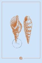 Hand-drawn Spiral Shells Vecto...
