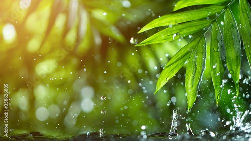 Fotografía fresh green leaves with water drops over the water , relaxation with water rippl