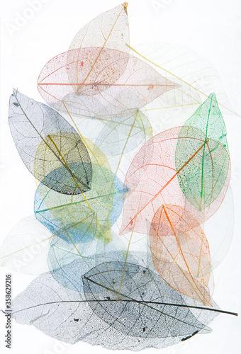 Obraz macro colorful skeleton and leaf veins - fototapety do salonu