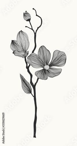 Valokuvatapetti Tender lines flower
