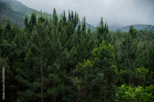 Native vegetation and reforestation of the mountains © Munique