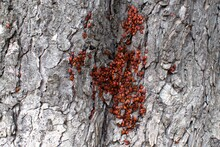 Large Family Of Red Bugs On A ...