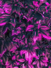 Floral Background With Bright ...