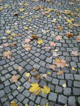 Fallen, Withered Yellow And Br...