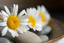 Daisy Mindfulness