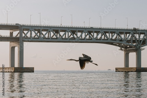 Photo Shallow focus shot of a Gray heron flying above the water with a steel bridge in