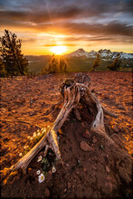 Stump Foreground With Mountain...