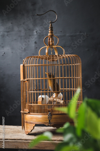 Fototapeta vintage birdcage with birds