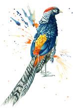 Pheasant And Paint Splashes, P...