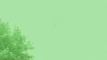 Light Green Background With Tr...