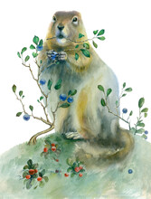 Watercolor Painting Gopher. Gr...