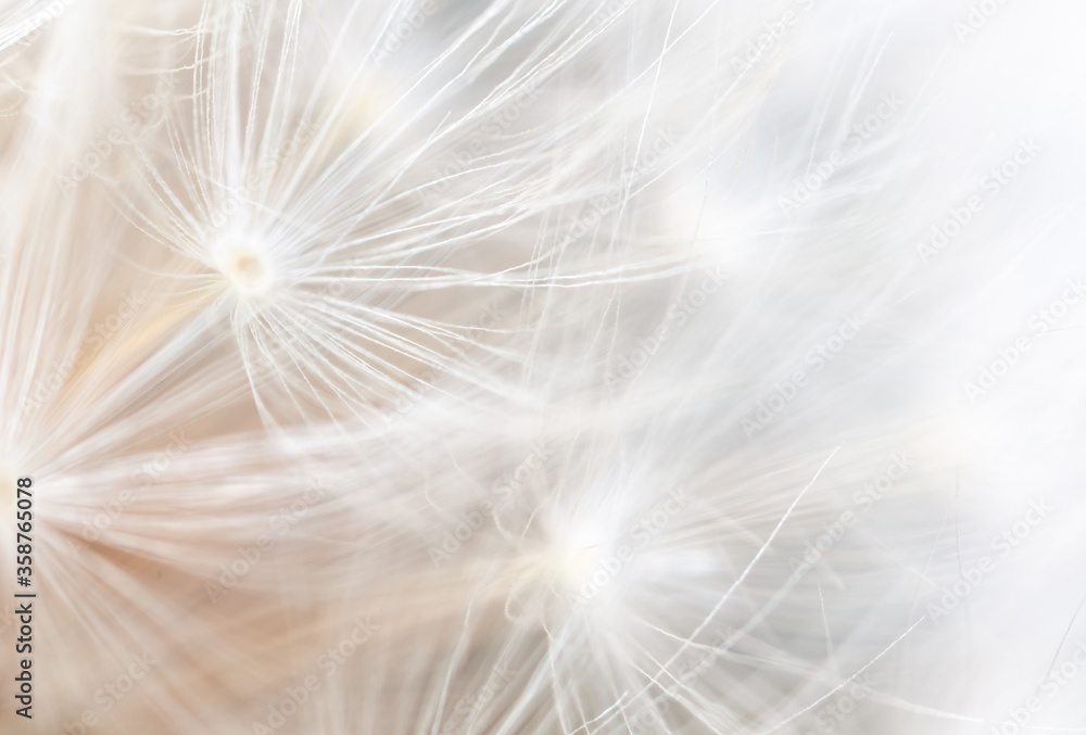 Close-up of a dandelion in nature.