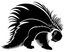 Porcupine. Black And White Vec...