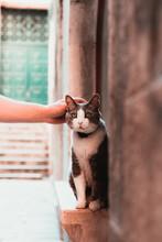 Hand Patting A Cute Street Cat...