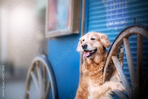 Fototapeta Hunde im Prater obraz