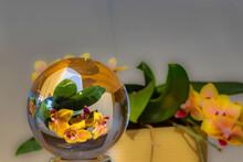 Mini Orchids In Glass Ball