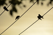 Birds Sitting On The Wire