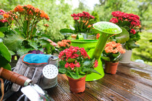 Outdoor Gardening Plants And T...