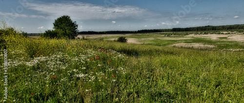 Fototapeta Piękna letnia łąka pokryta kwiatami. Panorama obraz
