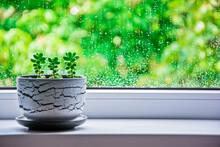 Right Three Succulent Plants I...