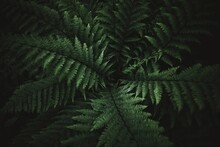 Beautyful Ferns Leaves Green F...
