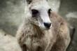 カンガルー 超接近の一枚 動物写真