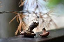 Still Life With Cones Mushroom...