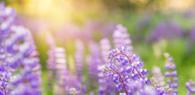 Summer Flower Background With ...