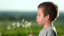 Boy Blowing On Big Dandelion Or Salsify At Sunset