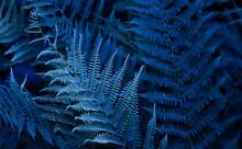 Blue Colored Fern Leaves Backg...