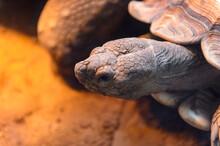 It's Big Turtles At The Beijin...