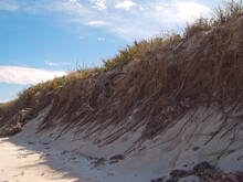 Dune Grasses On A Beach Dune In Central Florida With Bright Sunlight On The Beach And A Blue Sky With Clouds. Beach Erosion And Environmentalism