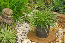 Beautiful Onament Plant Pot In The Garden