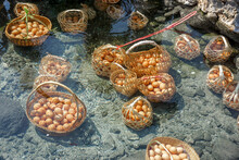 Closeup And Crop Chicken Eggs In Basket Of Tourists Boiled In Mineral And Natural Hot Water At Chae Son National Park, Lampang, Thailand.