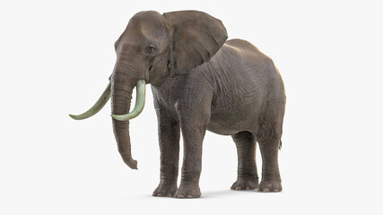 giant elephant. 3D render of an elephant isolated, 3d rendering