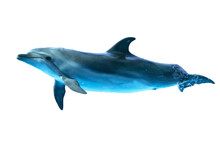 Dolphin Is Isolated On A White Background.
