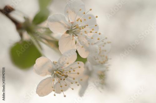 Kwitnące wiosenne drzewo