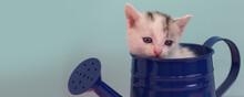 Funny, Cute Little Kitten Sits...