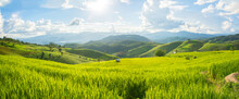 Panorama Green Rice Field With...
