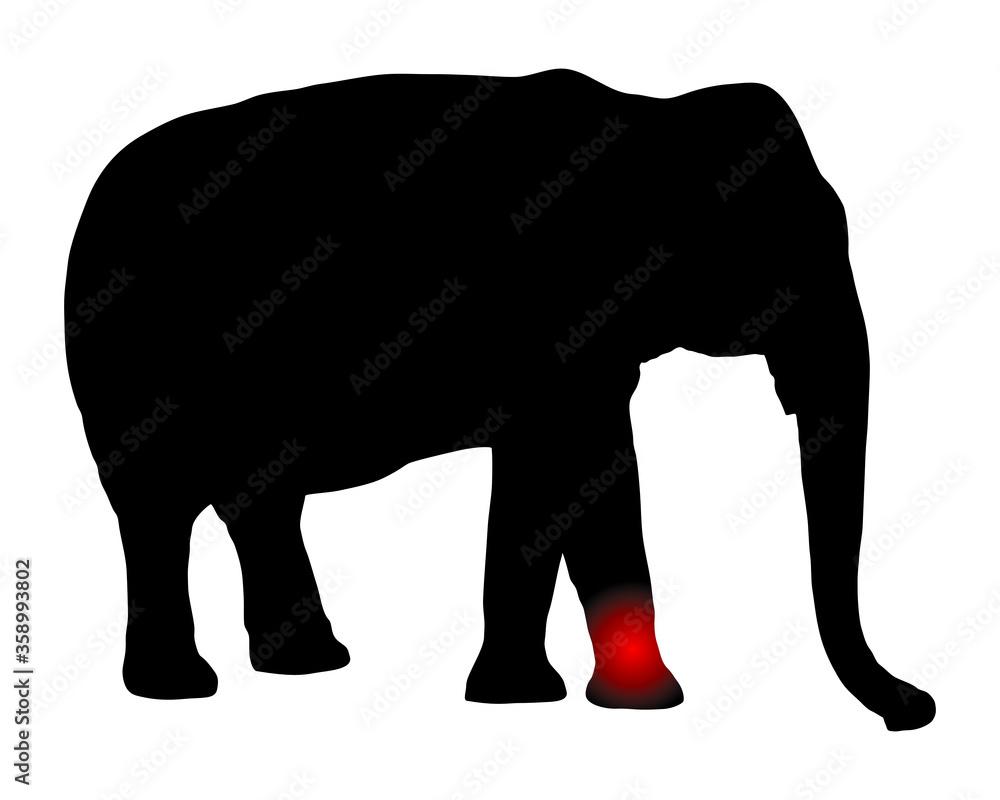 Fototapeta Elefant mit Schmerzen im Bein