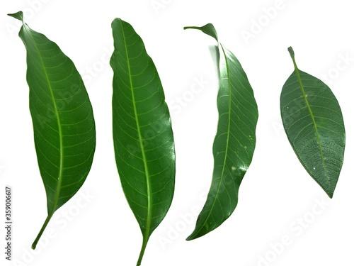 Photo Mango Leaf Stock Photos