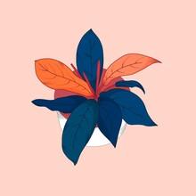 Pink Blue Prince Of Orange Hou...