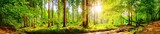 Fototapeta Las - Forest panorama with bright sun shining through the trees