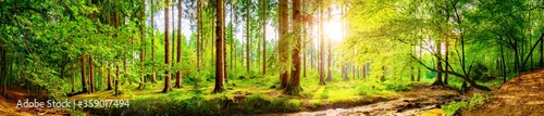 Foto Forest panorama with bright sun shining through the trees