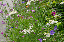 Flowering Strip With Wild Flowers At The Side Of The Road, Urban Green, City Greening, Nature In Town, Bee Pasture, Bee Friendly