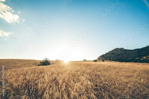 Fototapeta campo di grano in Calabria