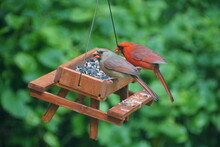 A Male And Female Cardinal Eating Seeds On A Wooden Picnic Table Bird Feeder