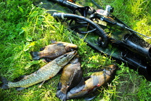 Spearfishing. Underwater Gun, ...