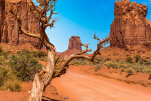 North Window View Through A Dead Tree In Monument Valley Tribal Park In Springtime